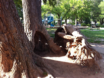 Trees Adjacent to Lafayette Playground Play Space May 2014